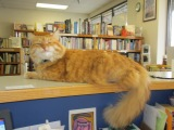 Dear Kittens: How to Help Your Local UsedBookstores