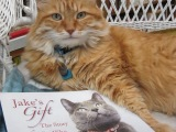 Jake's Gift: The Story of a Cat Who Wouldn't Quit by Pam Wolf